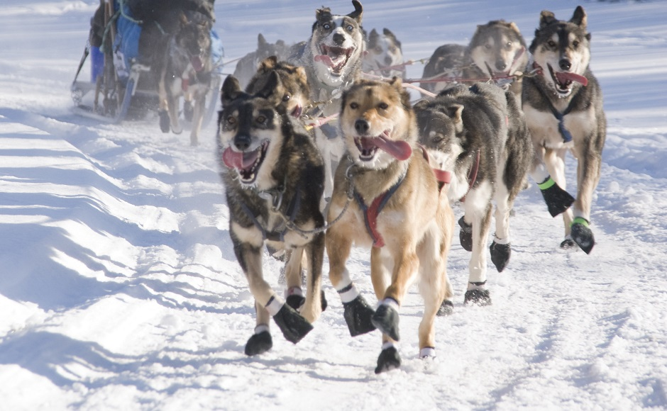 Dog Sledding -Full day-